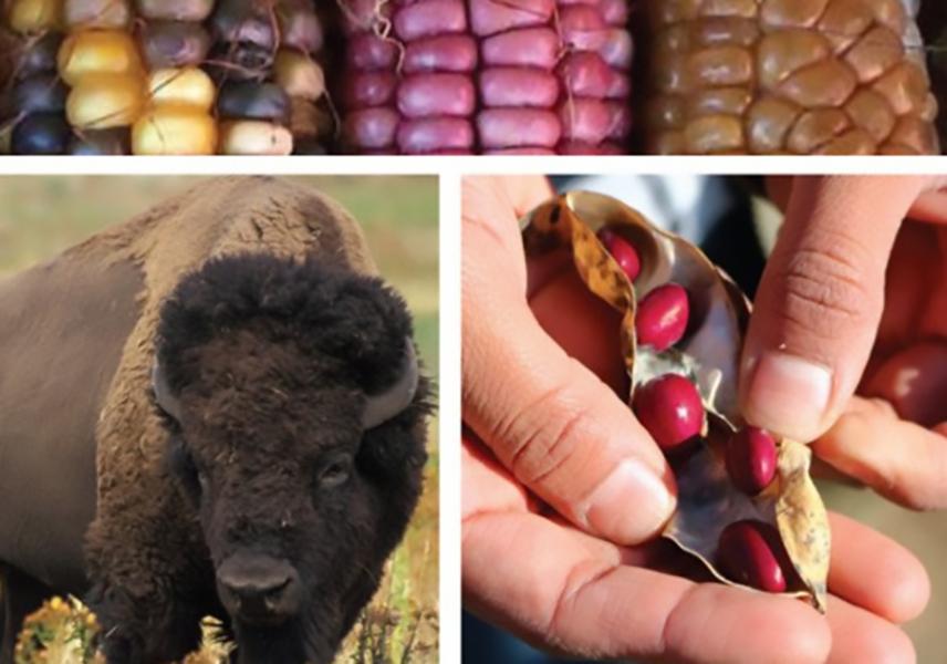 corn, buffalo, beans